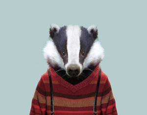 European-Badger-Meles-meles-copia